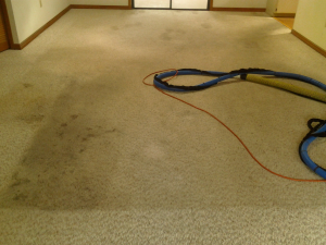 Carpet Care in Ocala